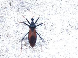 Coj/ín para ba/ñera Color Negro con 8 ventosas, Antibacteriano, Antideslizante, Lavable 23 x 32 cm Spirella Alaska