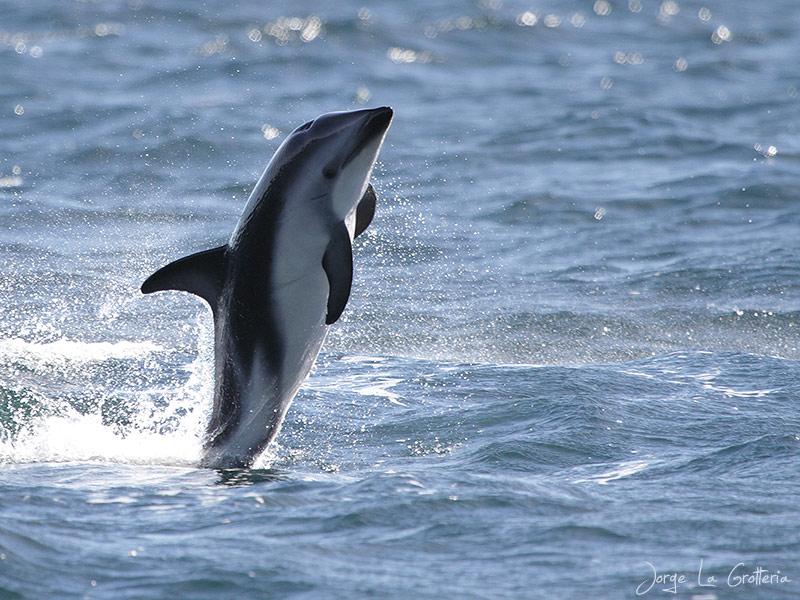 .::Delfín Oscuro::. IMG_2349-EDIT