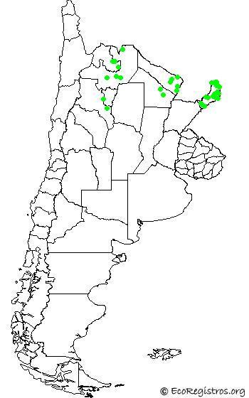 mapaespeciebyid - HALCON MONTES GRANDE (Micrastur semitorquatus)