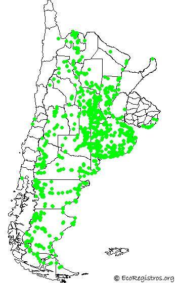 mapaespeciebyid - FLAMENCO AUSTRAL (Phoenicopterus chilensis)
