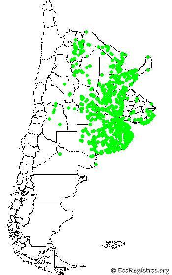 mapaespeciebyid - ESPATULA ROSADA (Platalea ajaja)