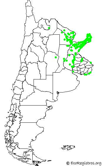 mapaespeciebyid - CHIMACHIMA (Milvago chimachima)