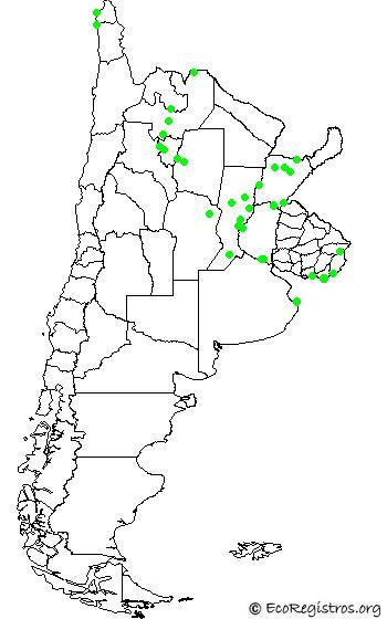 mapaespeciebyid - GARZA AZUL (Egretta caerulea)
