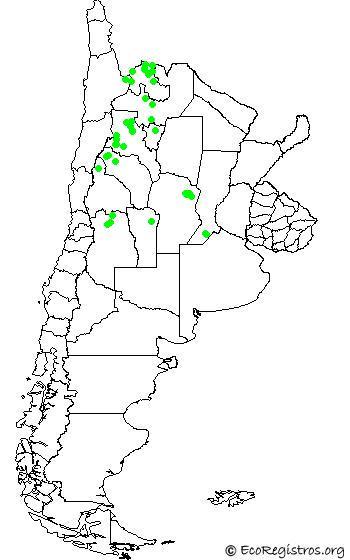 mapaespeciebyid - PARINA CHICA (Phoenicoparrus jamesi)
