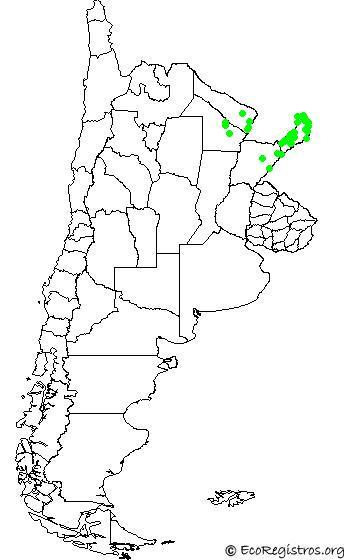 mapaespeciebyid - MILANO CABEZA GRIS(Leptodon cayanensis)