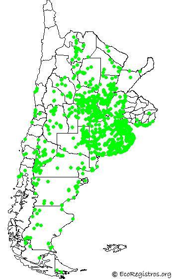 mapaespeciebyid - MACÁ COMÚN (Rollandia rolland)